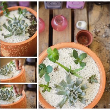 How Not to Kill Succulents!